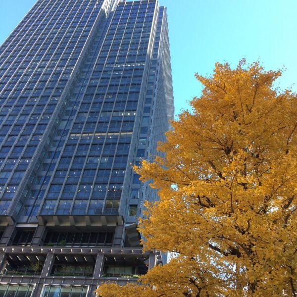 新丸ビルと色づいたイチョウの写真