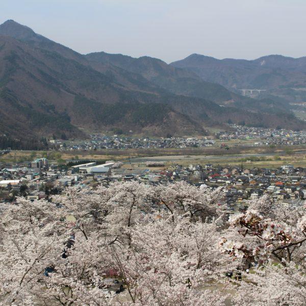 戸倉宿キティパークの桜と千曲市の街並みの写真