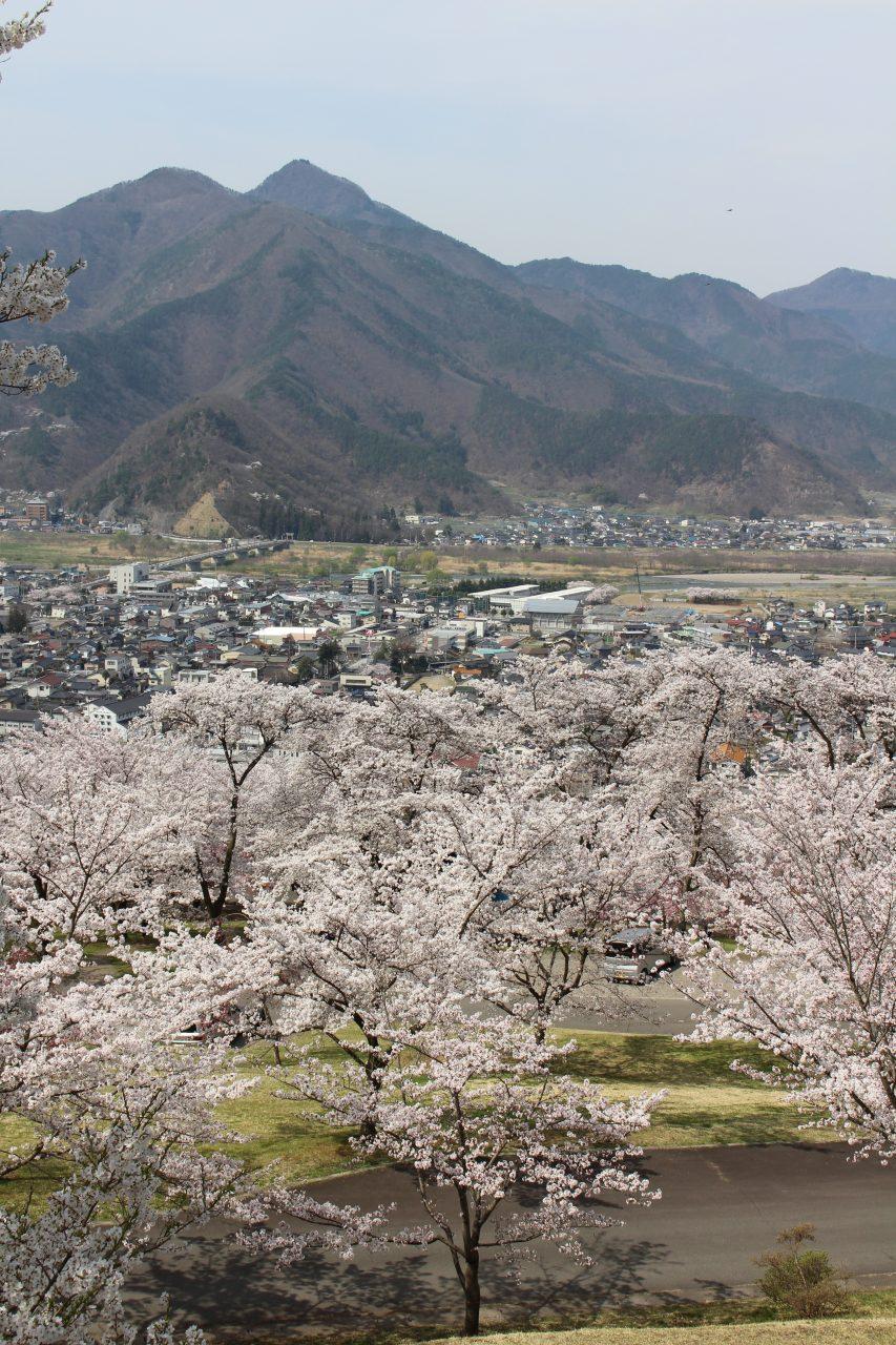 戸倉宿キティパークの桜と千曲市の街並み2の写真