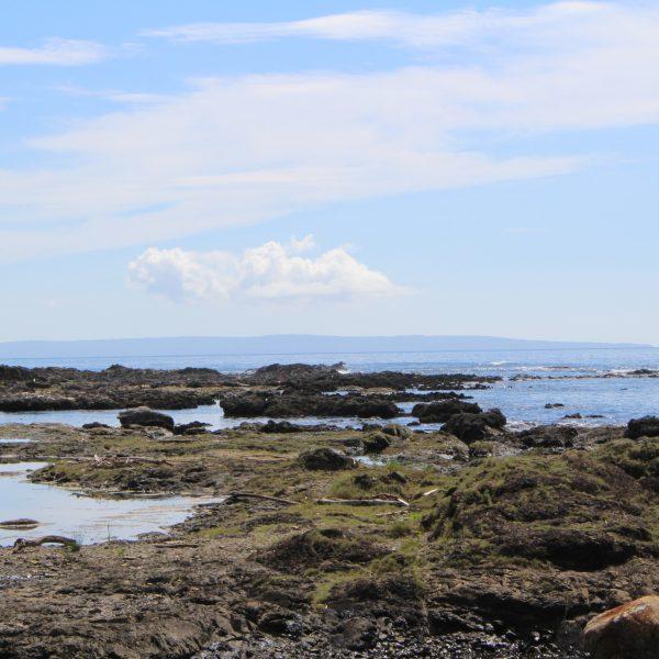 春田浜海水浴場の岩礁5の写真