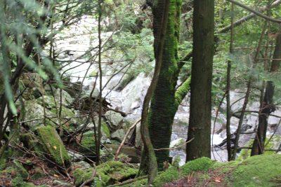 屋久島の森と沢の写真