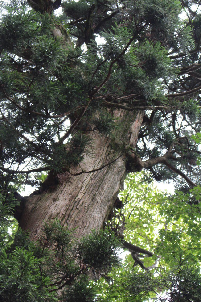 屋久島の森と巨木8の写真