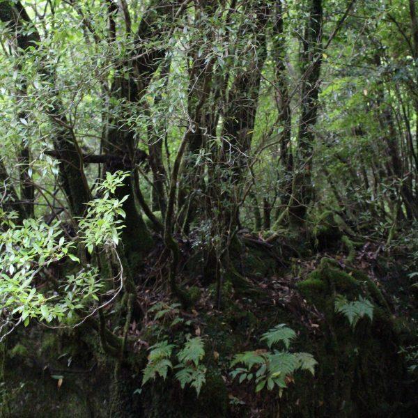 屋久島の森の写真