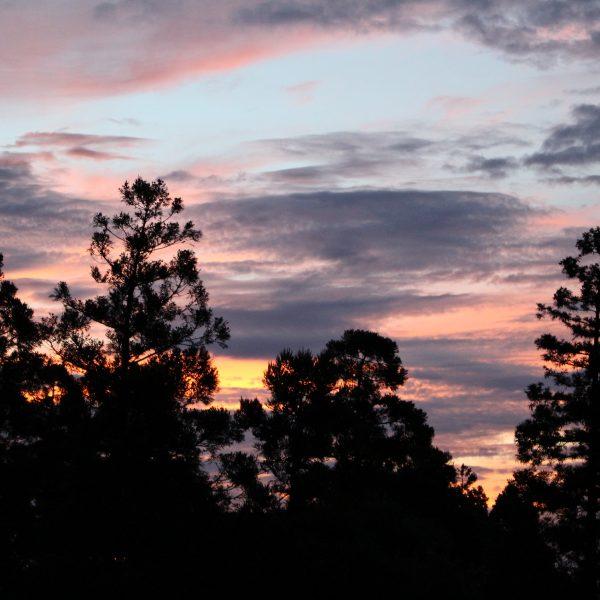 屋久島登山口の森と朝焼けの写真