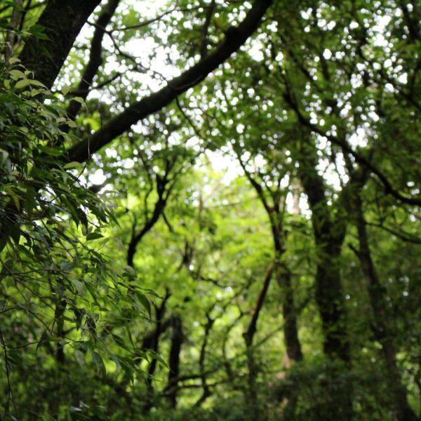 屋久島の森4の写真