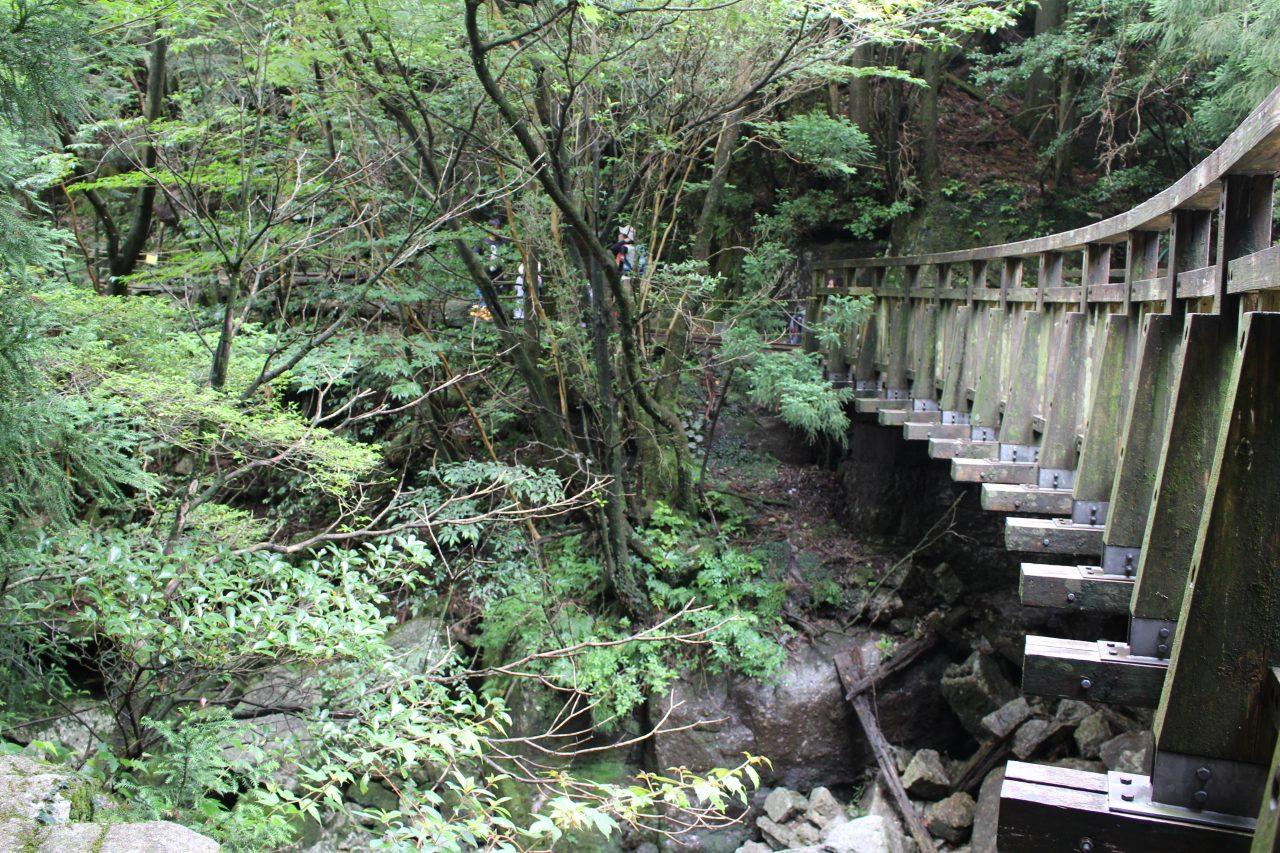 屋久島の沢とトロッコ橋の写真