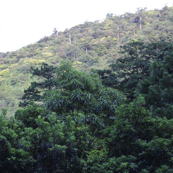 屋久島の森と山の写真