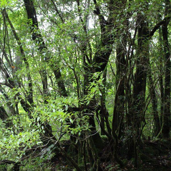 屋久島の森2の写真